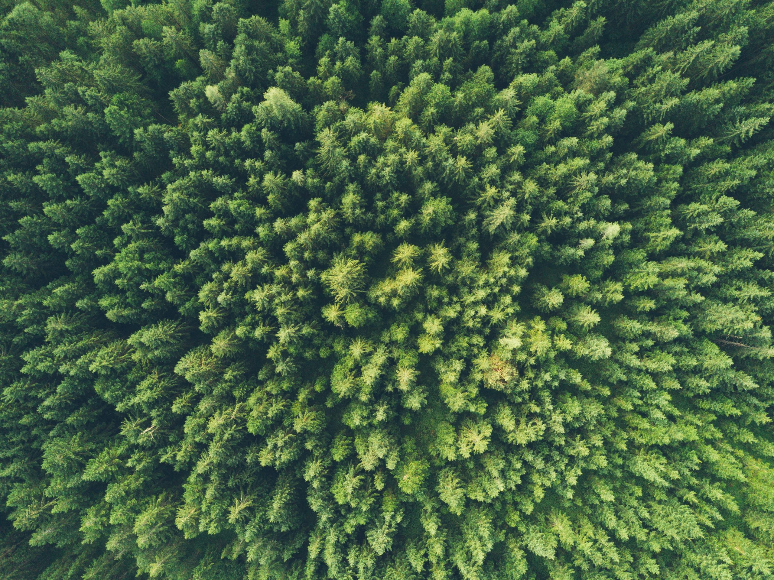 The OECD publishes its 2020 Luxembourg Environmental Performance Review
