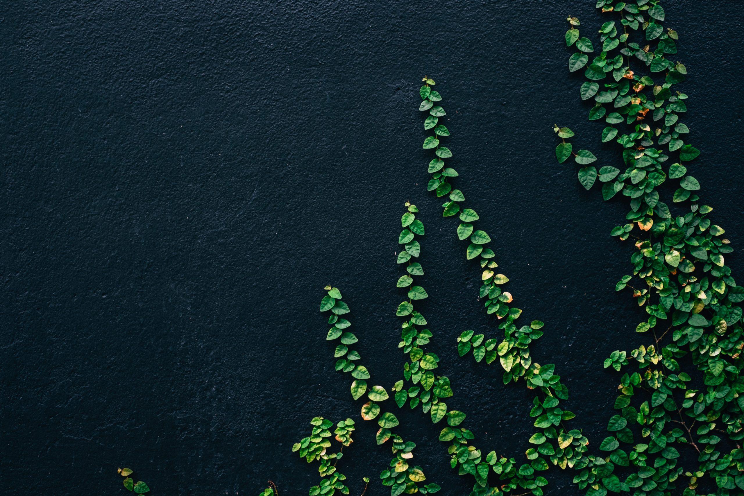 IMS – How social business can transform companies I 13 January